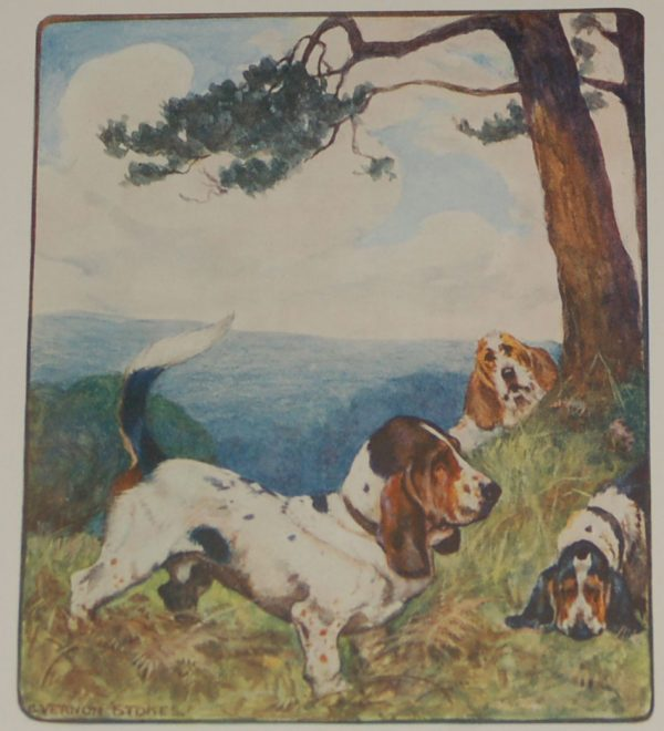 Antique Print 1909 Bassett Hound at Antico.gallery