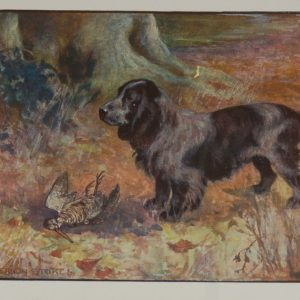 1909 Antique print Cocker Spaniel For Sale