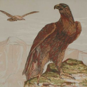 Antique Bird Print 1856 The Golden Eagle Harrison Weir