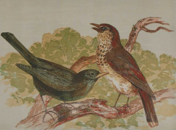 1856 Hand Coloured Antique Print an engraving The Thrush and The Blackbird by Harrison Weir.