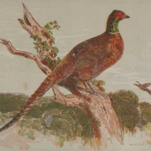 1856 Hand Coloured Antique Print The Pheasant