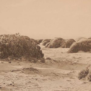 Original 1925 vintage photogravure Sandy Plain near Botriver Mouth Plate 1 by Rudolph Marloth