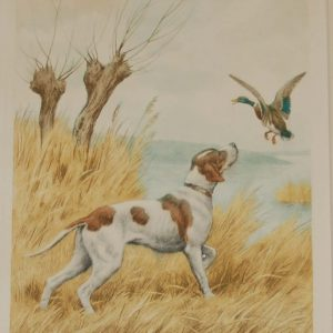 1935 vintage print an etching of a Pointer raising some ducks. The print is signed in pencil by the artist Paul Wood and was released by the Paris Etching Society.